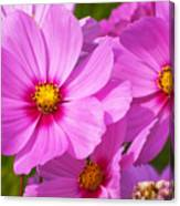 Pink Flower Conspirisy Canvas Print