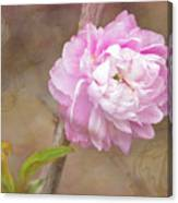 Dwarf Flowering Almond Romantic Floral Canvas Print