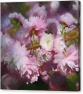 Pink Flowering Almond Canvas Print