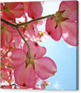 Pink Flowering Dogwood Tree Art Prints Blue Sky Baslee Troutman Canvas Print