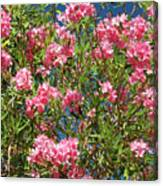 Pink Flowering Shrub Canvas Print