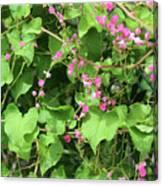 Pink Flowering Vine1 Canvas Print