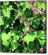 Pink Flowering Vine2 Canvas Print