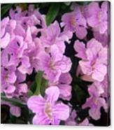 Pink Flowers. 6-22-17 Canvas Print