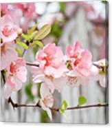 Pink Flowers And A White Picket Fence Canvas Print