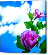 Pink Flowers On A Blue Sky Canvas Print