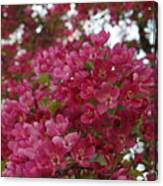 Pink Flowers On Blooming Tree Canvas Print