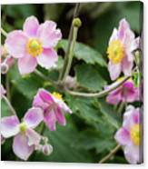 Pink Flowers Over Green Canvas Print