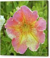 Pink Flowers P80 Canvas Print