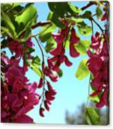 Pink Flowers Virginia City Nv Canvas Print