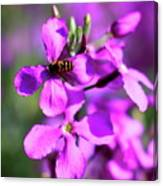 Pink Flowers With Bee . 40d4803 Canvas Print