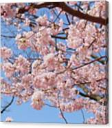 Pink Fluffy Branches Canvas Print