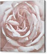 Pink Garden Rose Canvas Print