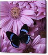 Pink Gerbera Daises And Butterfly Canvas Print