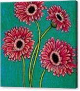 Pink Gerberas Canvas Print