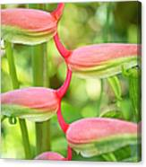 Pink Heliconia Flower Canvas Print