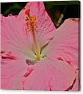pink hibiscus I Canvas Print