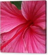 Pink Hibiscus Canvas Print