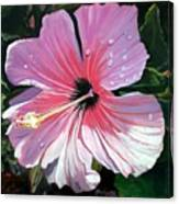 Pink Hibiscus With Raindrops Canvas Print