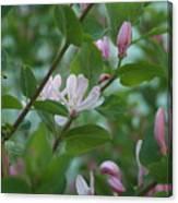 Pink Honeysuckle Canvas Print