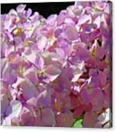 Pink Hydrangea Flower Floral Art Prints Baslee Troutman Canvas Print