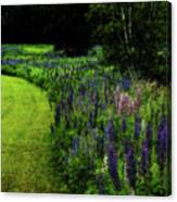 Pink In The Lupine Margin Canvas Print
