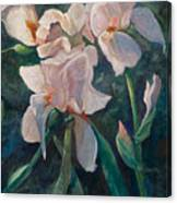 Pink Iris Canvas Print