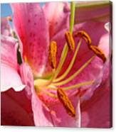Pink Lilies Art Prints Lily Flowers 3 Giclee Artwork Baslee Troutman  Canvas Print