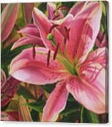 Pink Liliums Canvas Print