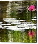 Pink Lily 12 Canvas Print