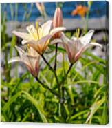 Pink Lily By The Lake Canvas Print