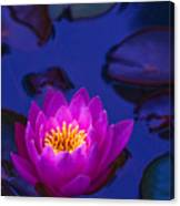 Pink Lily Glowing Canvas Print