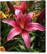 Pink Lily Lush Garden Canvas Print