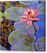 Pink Lily With Silver Pads Canvas Print