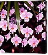 Pink Little Orchids Canvas Print