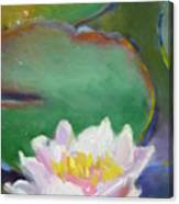Pink Lotus Canvas Print