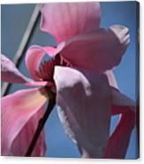 Pink Magnolia Closeup Canvas Print