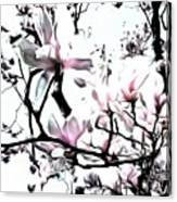 Pink Magnolia - In Black And White  Canvas Print