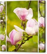 Pink Magnolia Triptych Canvas Print
