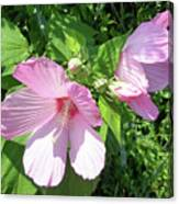 Pink Marsh Mallow Wildflower Canvas Print