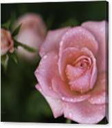 Pink Miniature Roses 3 Canvas Print