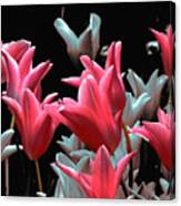Pink N Silver Tulips Canvas Print