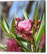 Pink Oleander IIi Canvas Print