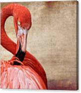 Pink On Brown Scratch Canvas Print