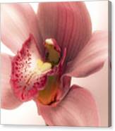 Pink Orchid Canvas Print