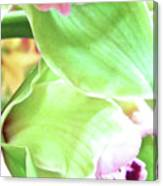 Pink Orchid With Green 1 Canvas Print