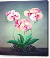 Pink Orchids 2 Canvas Print