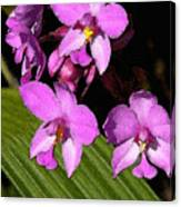 Pink Painted Orchids Canvas Print