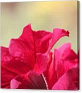 Pink Passion Petunia Canvas Print