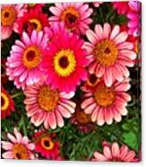Pink Patterned Mums Canvas Print